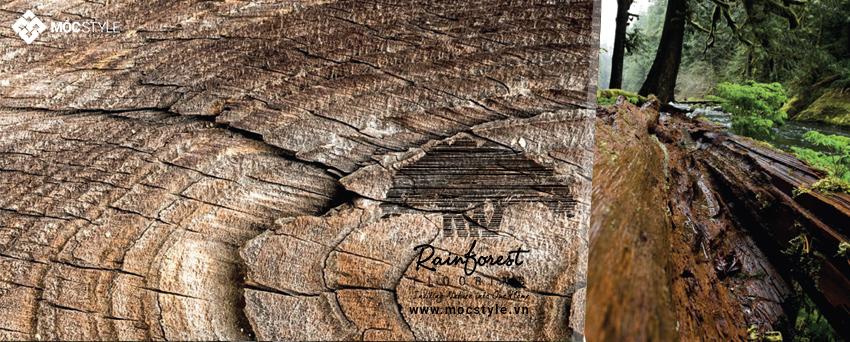 Sàn gỗ Rainforest 12mm