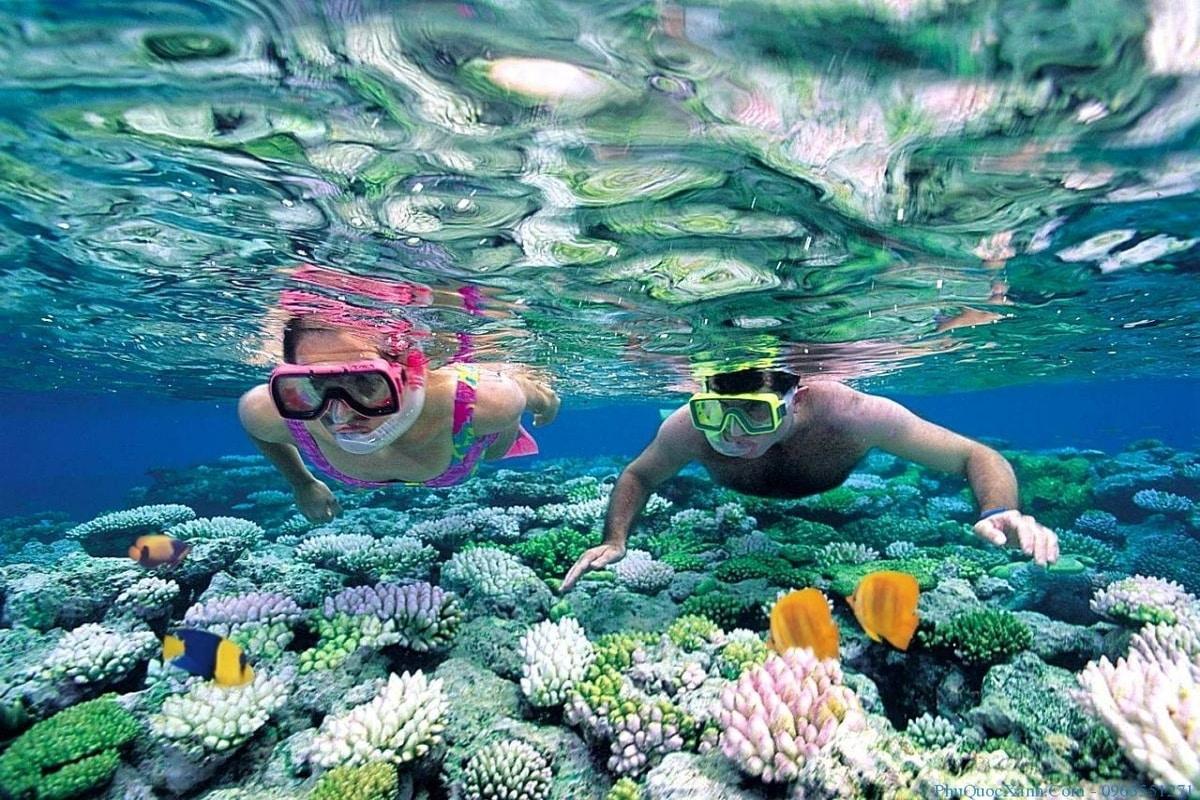Bơi ngắm san hô Nha Trang