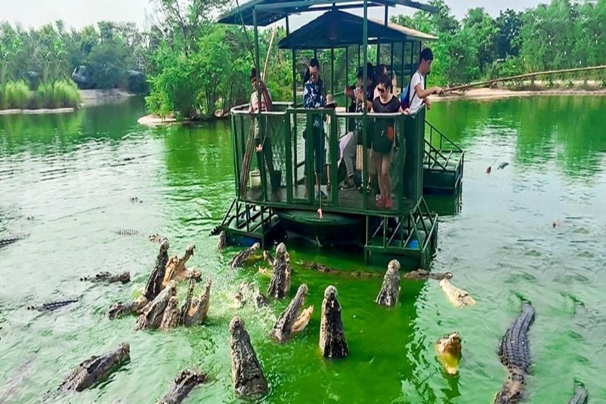 câu cá sấu yangbay