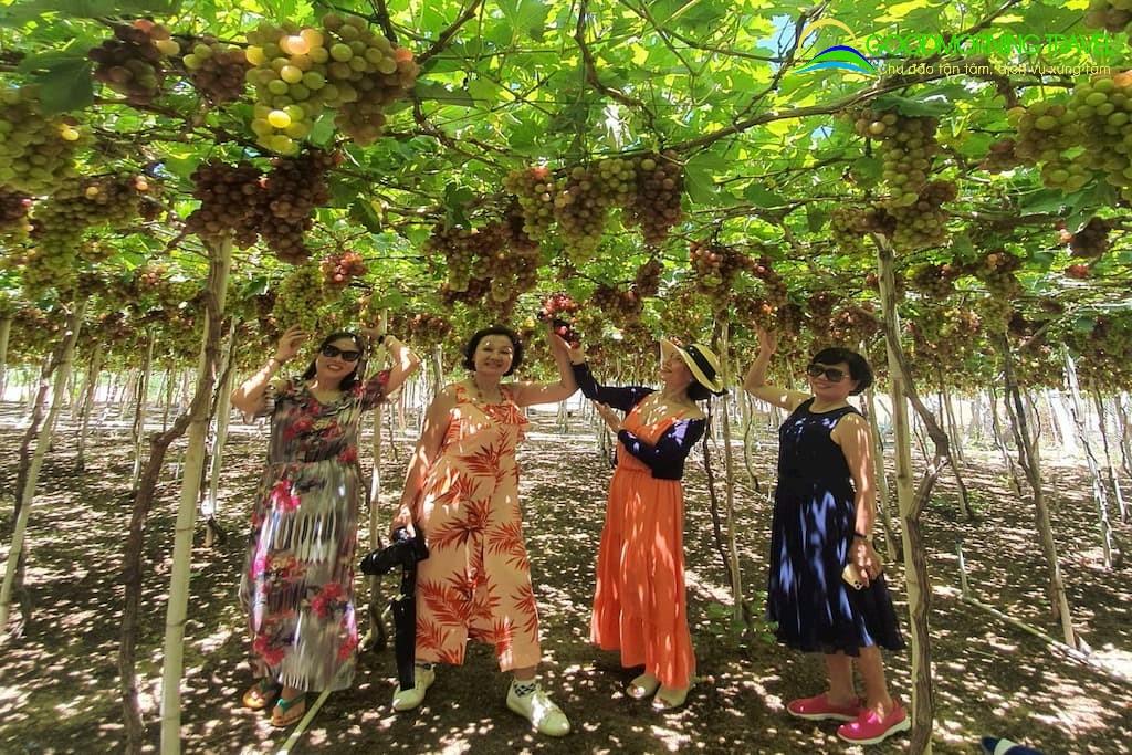 Tour Vĩnh Hy Hang Rái Vườn Nho Đồng Cừu: Giá rẻ nhiều ưu đãi hấp dẫn | Công  Ty TNHH Du Lịch Chào Ngày Mới