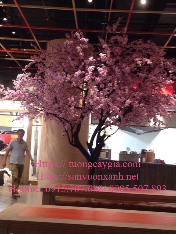 Một số dáng cây hoa anh đào tại thị trường Hà Nội