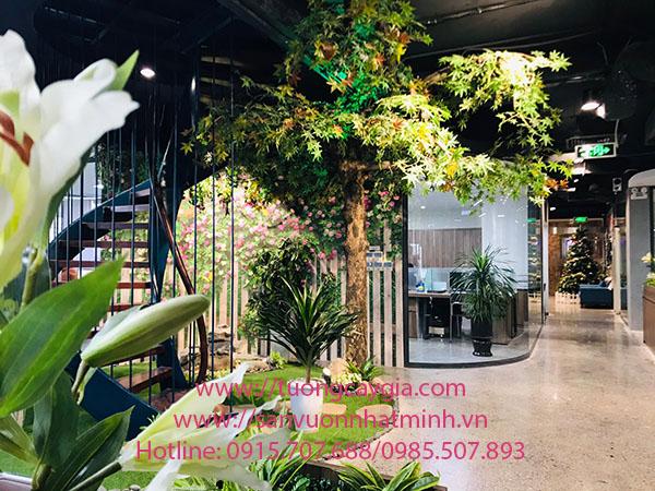 Cây phong xanh tại văn phòng đường Dương Đình Nghệ - Cầu Giấy - Hà Nội