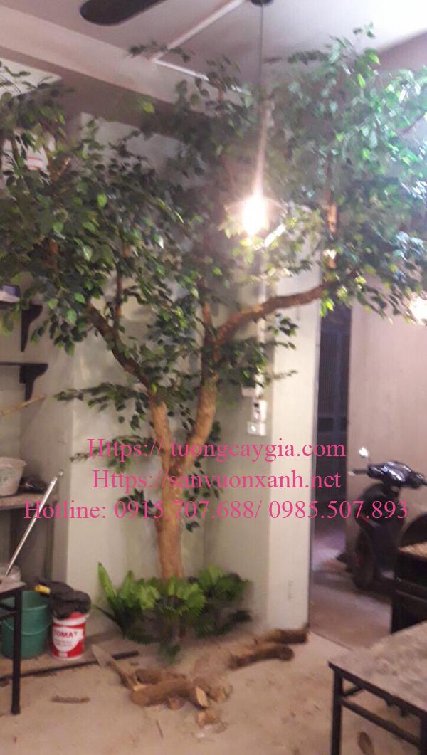 Báo giá cây si giá rẻ nhất tại Hà Nội, HCM