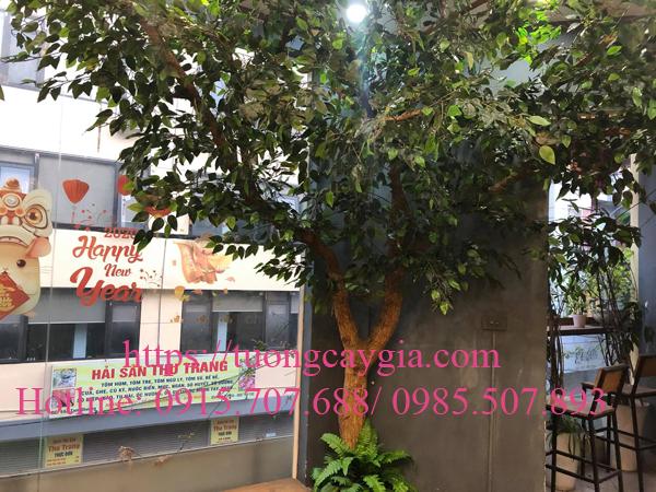 Cung cấp và lắp đặt cây si xanh tại Hoa Chanh Coffee - Hà Nội