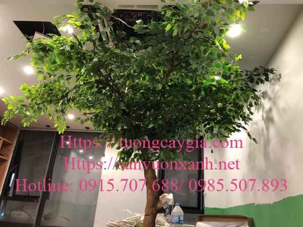 Thi công cây si tại 152 Ô chợ dừa - Đống Đa, Hà Nội