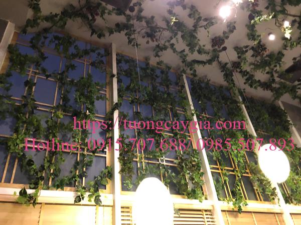 Trang trí ây leo bám tường tại nhà hàng Nhật Bản số 44 Yên Phụ, Tây Hồ, Hà Nội