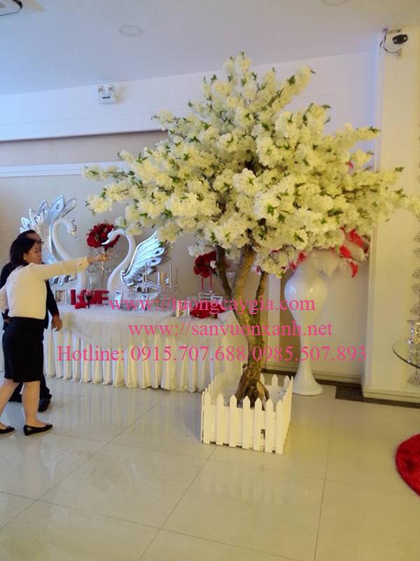 Hoa đào chùm màu trắng kem tại trung tâm tiệc cưới