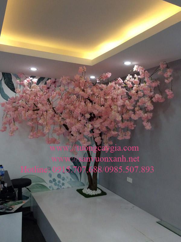 Hoa anh đào chùm tại Hà Nội