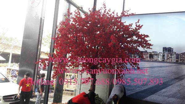 Hoa anh đào tại showroom trưng bày ô tô Mercedes đường Phạm Hùng - Hà Nội