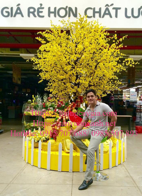 Hoa mai vàng khoe sắc tại Tp HCM