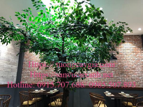 Trang trí cây si tại số 12 Phạm Ngọc Thạch - Hà Nội