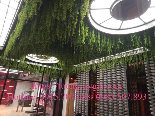 Vườn cây dây leo mọc ngược tại Trung tâm thể hình GYM - Quang Trung - Gò Vấp