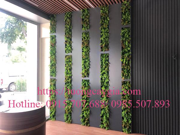 Thi công lắp đặt hệ thống cây xanh tại showroom gạch Viglacera - Văn Phú - Hà Đông - Hà Nội