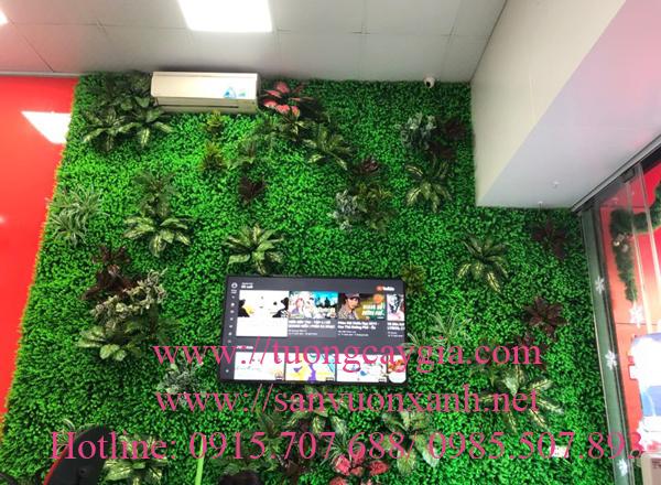 Thi công tường cỏ điểm cụm lá tại trung tâm tiếng anh IMAP