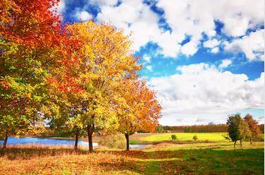 Tranh phong cảnh mùa thu 10