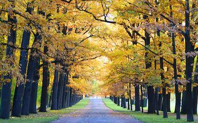 Tranh phong cảnh mùa thu 100