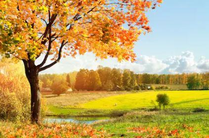 Tranh phong cảnh mùa thu 11