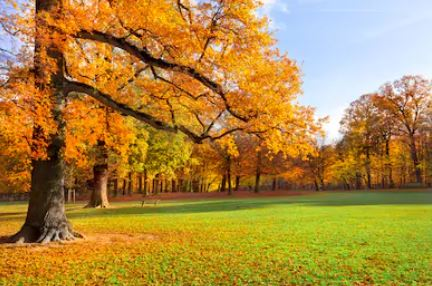 Tranh phong cảnh mùa thu 12