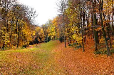 Tranh phong cảnh mùa thu 13