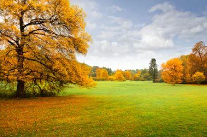 Tranh phong cảnh mùa thu 14