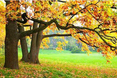 Tranh phong cảnh mùa thu 15