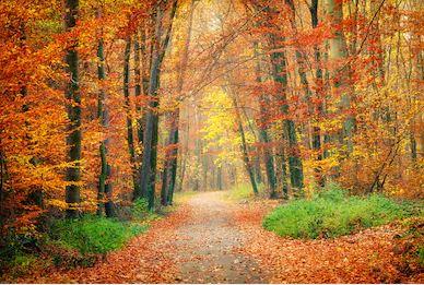 Tranh phong cảnh mùa thu 16