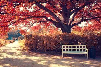 Tranh phong cảnh mùa thu 17