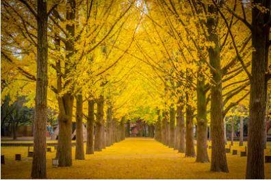 Tranh phong cảnh mùa thu 18
