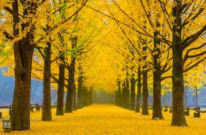 Tranh phong cảnh mùa thu 02