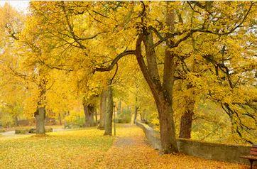 Tranh phong cảnh mùa thu 21