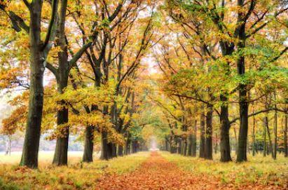 Tranh phong cảnh mùa thu 23