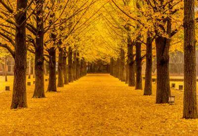 Tranh phong cảnh mùa thu 24