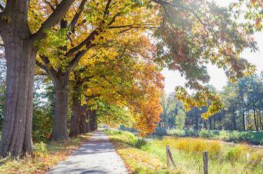 Tranh phong cảnh mùa thu 26