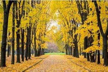 Tranh phong cảnh mùa thu 27
