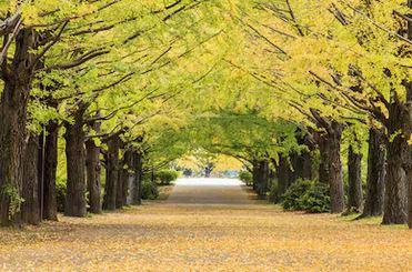 Tranh phong cảnh mùa thu 28