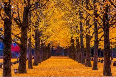 Tranh phong cảnh mùa thu 29