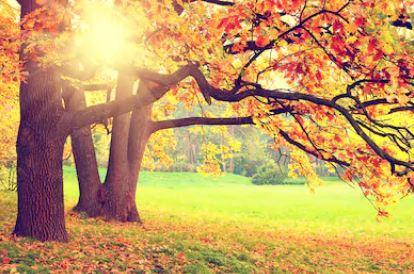 Tranh phong cảnh mùa thu 03