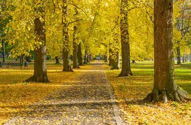 Tranh phong cảnh mùa thu 31