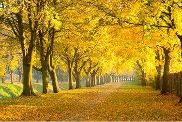 Tranh phong cảnh mùa thu 32