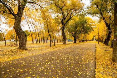 Tranh phong cảnh mùa thu 33