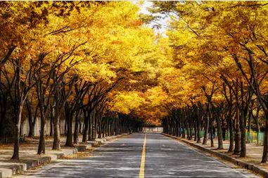 Tranh phong cảnh mùa thu 34