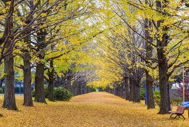 Tranh phong cảnh mùa thu 35