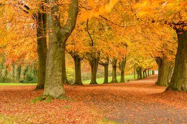 Tranh phong cảnh mùa thu 36