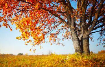 Tranh phong cảnh mùa thu 37