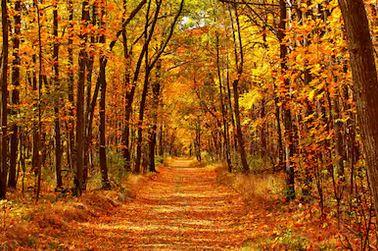 Tranh phong cảnh mùa thu 39