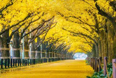 Tranh phong cảnh mùa thu 04