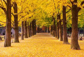 Tranh phong cảnh mùa thu 40