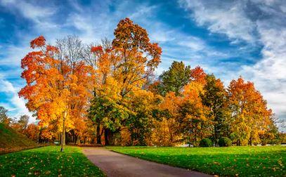 Tranh phong cảnh mùa thu 42