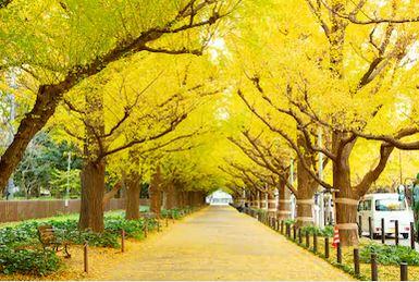 Tranh phong cảnh mùa thu 43