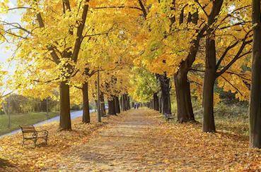 Tranh phong cảnh mùa thu 44